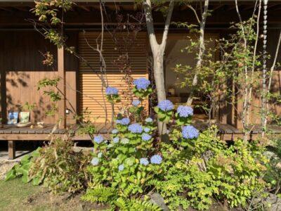 神宮の家モデルハウス2度目の春④☆